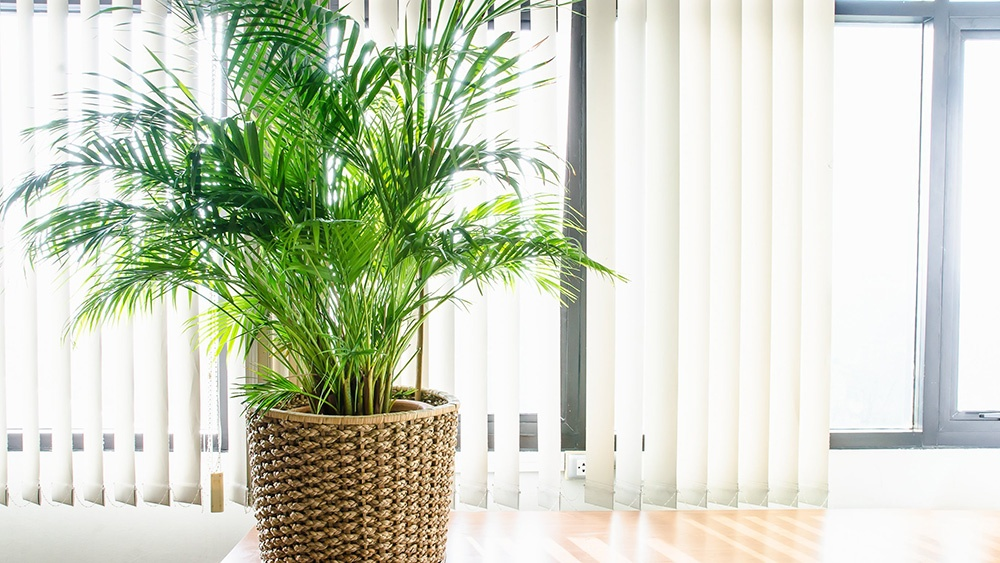 5 Ways To Naturally Improve Indoor Air Quality