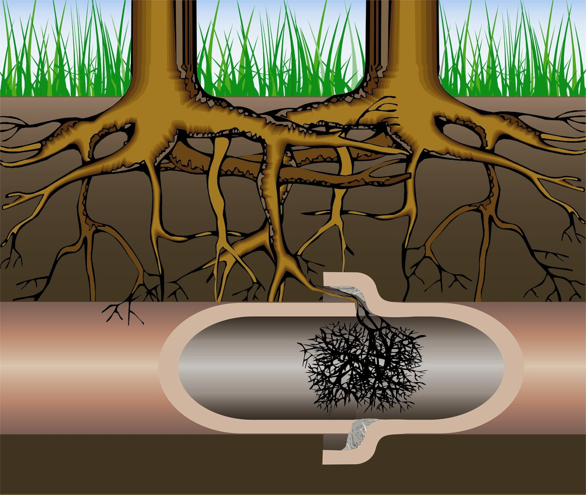 How Roots Affect Your Plumbing